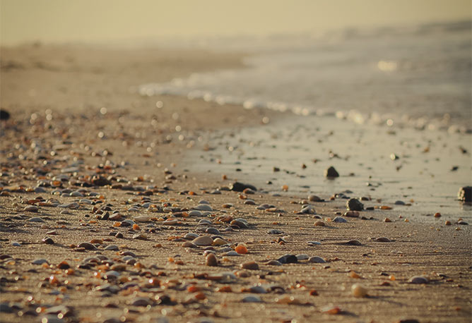 Zebedee seashore