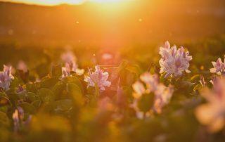 Field of sunshine by Brian Garcia